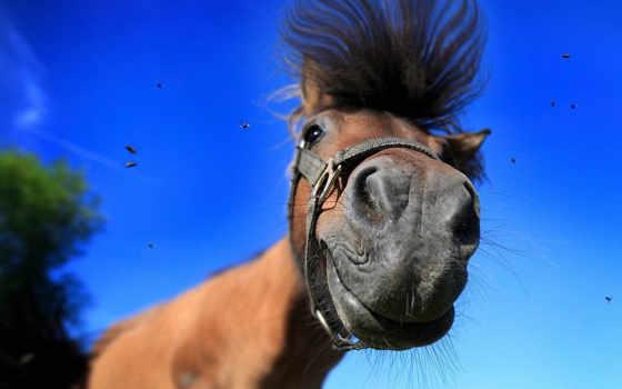 лошадь, лошадей, смешные