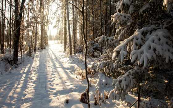 лес, winter, снег, wisconsin, cover, phillips, browse,