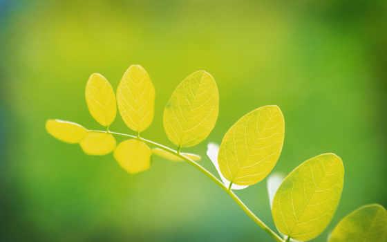 зелёный, листва, макро, зелёная, сочная, страница, деревьев, листья, фотографий,
