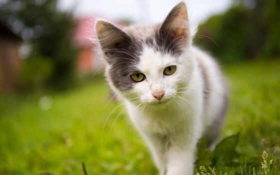 кот, май, котенок, календарь, she, time, enjoy, содержать, фото