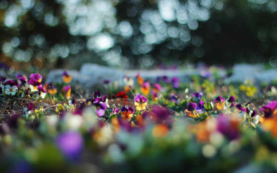 цветы, лето