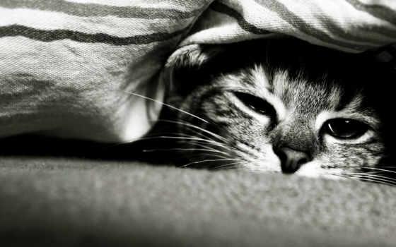 кот, под, спит