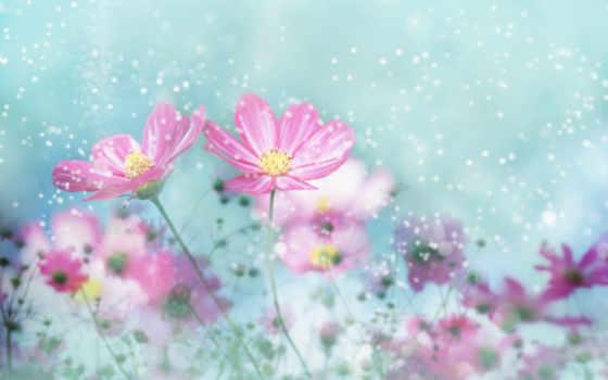 весенние, цветы, весна