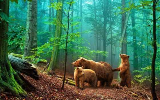медведи, mine, лес, desktopwallpape, трио,
