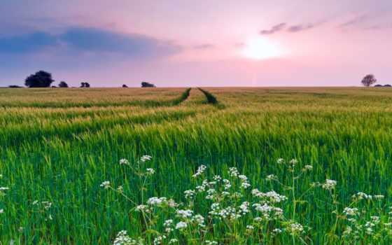 трава, поле, небо, summer, природа, цветы, oblaka, вечер,
