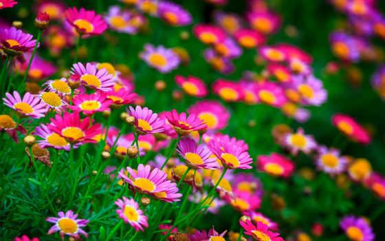 summer, природа, cvety, поляна, сделать, bush, заставками,