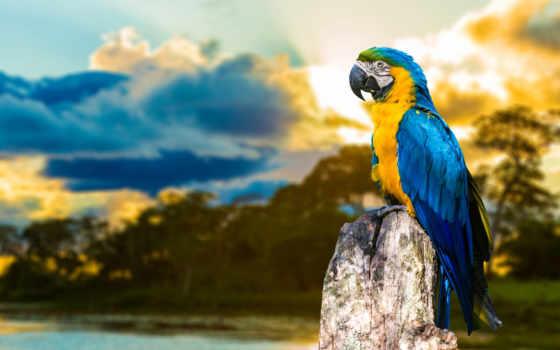 попугаи, птицы, zhivotnye, попугай, branch, zoom, животных, разделе, parrots,