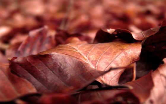 desktop, телефон, макро, листья, листва, осенние, разных,