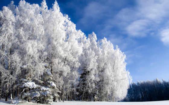 зима, небо, холодно, иний, лес, картинка, but, cold,