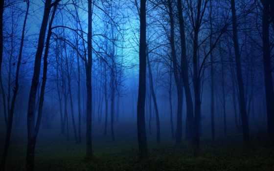 ночь, деревья, свет