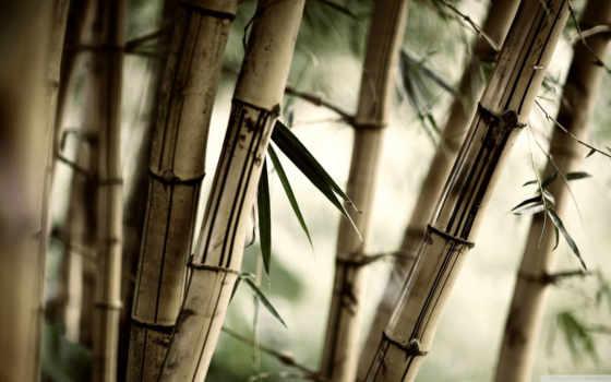 бамбук, растительность, взгляд