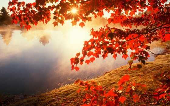 утро, но, осень