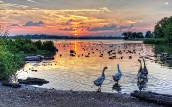 rock, озеро, white, texas, goose, dallas, закат, landscape, home,