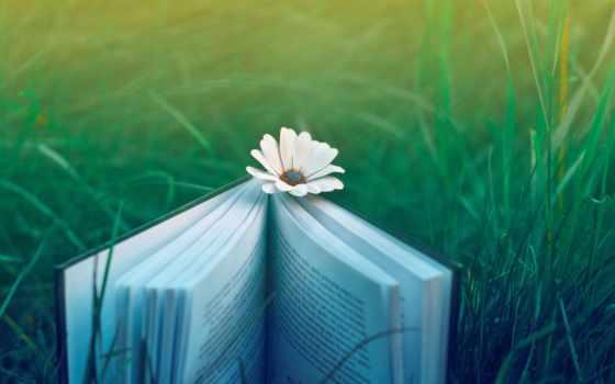 книга, ромашка, цветы, трава, природа, широкоформатные, настроение, ipad, cvety,