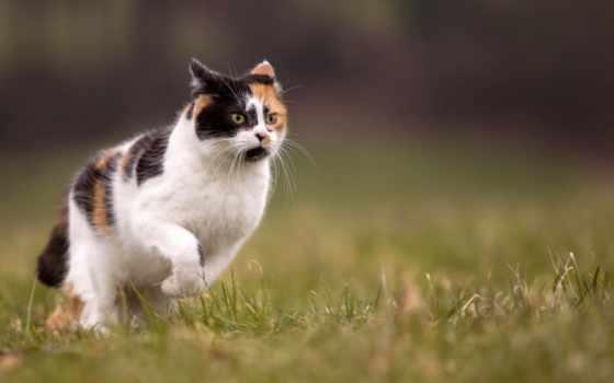 кот, трава, running, summer, размытость, природа, desktop, were,