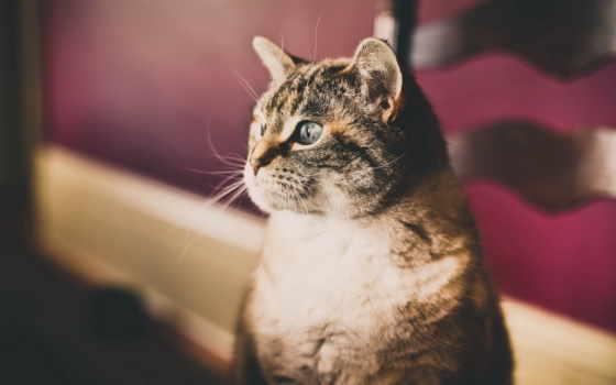 red, кот, amazing, смотрит, mixed, разных, сторону, пристально,