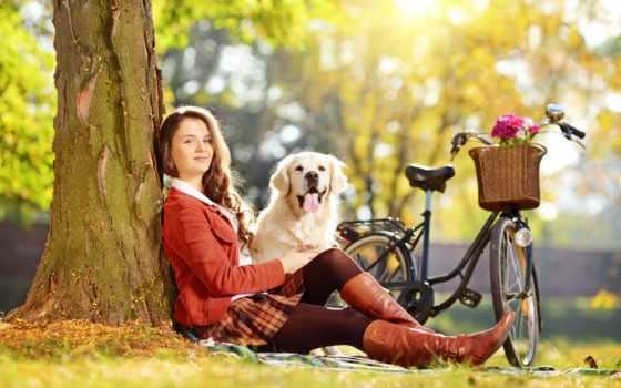 коллекция, фотосессия, собака, animal, bike, который