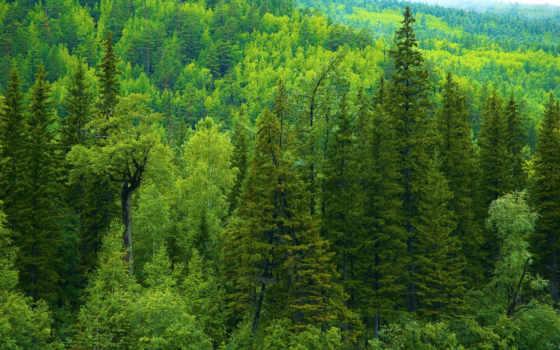 природа, леса, лес