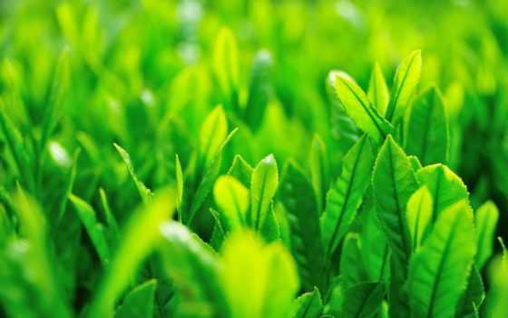 трава, макро, листья