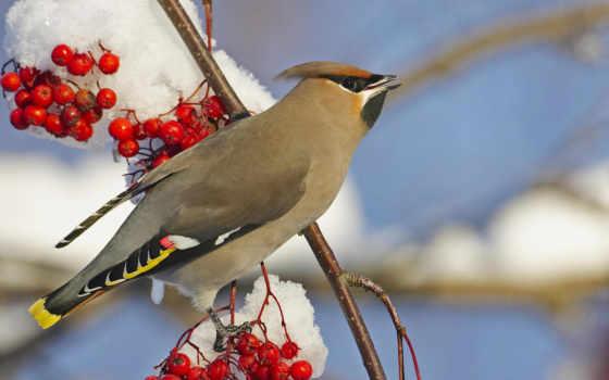 птицы, birds, zhivotnye