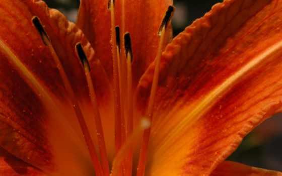 оранжевый, this, votre, next, free, ecran, цветы,