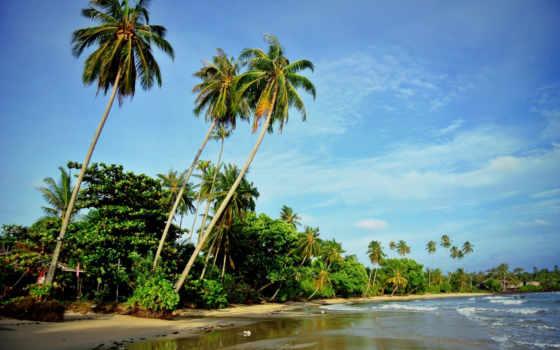 пляж, море, пальмы,