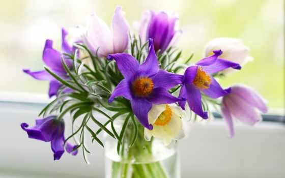 cvety, flowers, фиолетовые, розовые, plants, букет, ваза, прострел, подробнее, pulsatílla,