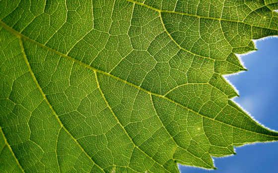 текстура, природа, зелёный, изображения, бесплатные, трава, лист, текстуры, desktop,