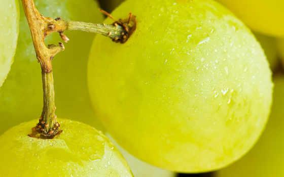 grape, desktop,
