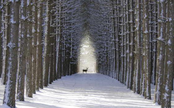где, кончается, об, там, терпение, начинается, endurance, самый, forests,