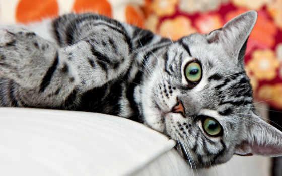 tiscali, картинок, коллекция, desktopwallpape, кот, котейки, кошерные, нояб, они, очень, иными,