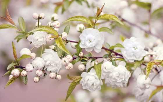 весна, год, cvety, branch, цветение, duvar, arka