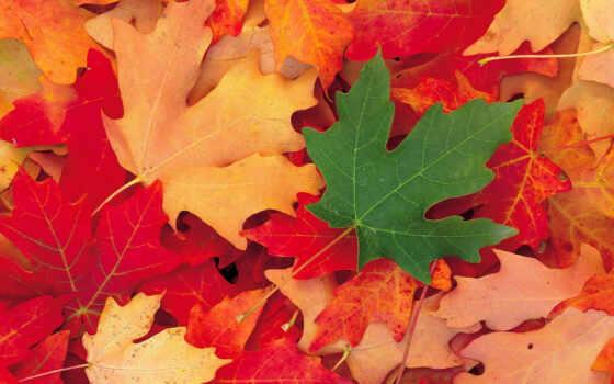 осень, листья Фон № 16614 разрешение 1920x1200