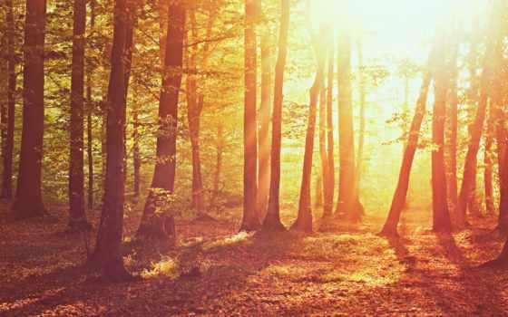природа, свет