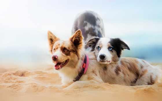 пляж, собаки, this, собака, animals, два, dogs, zhivotnye,