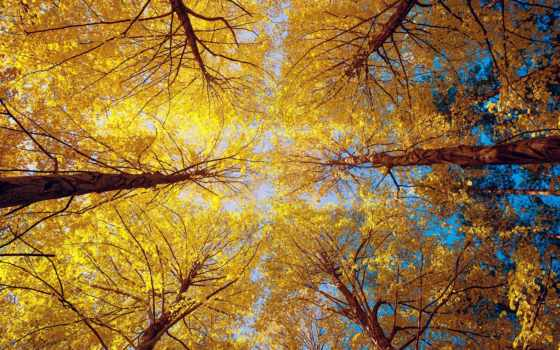 взгляд, ниже, trees, разрешениях, разных, осенние, осень, дерево, небо, красавица,