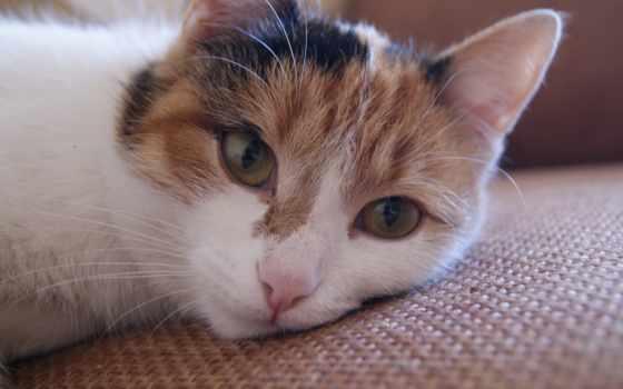 cats, gatos, salvapantallas, кот, szemekkel, ilyen, néz, barátnőm,