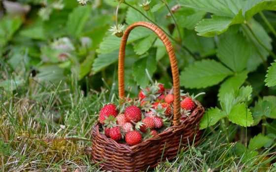 клубника, ягоды, strawberries, berries, картины, купить, картину, модульную, торт,