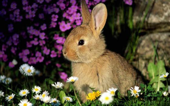 кролик, cvety, трава