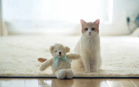 toys, cats, кот, медведь, котенок, cute, toy, teddy, две, animal,
