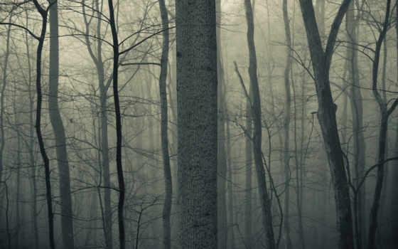 лес, тихо