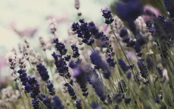 cvety, природа, цветение, растения,