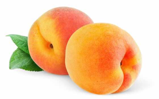персики, саженцы, персика, персик, online, беременности,