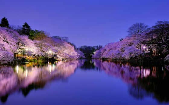 japanese, Сакура, осака, park, озеро, город, фонари, освещение, trees, ночь,
