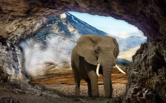 elefante, картинка, взгляд, стиль, слон, niebla, diamond, бренд, магазин, rolled