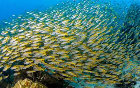 fish, фото, water, овцы, под, royalty, косяк, они, использование