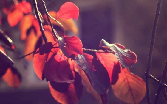 свет, листья