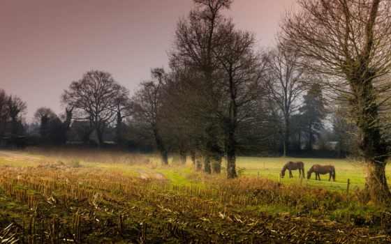кони, rendering, работоспособность