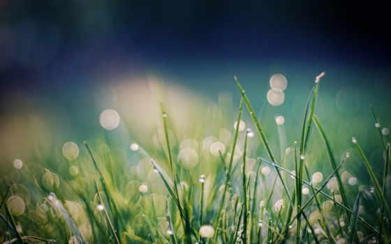 роса, трава, формате, заставки, можно,