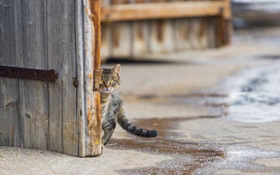 кот, улица, zhivotnye